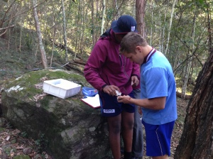 data collection in the forest