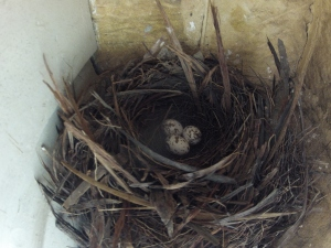 The cosy nest.