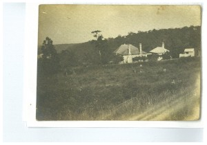 Brewongle felled forest circa early 1900's
