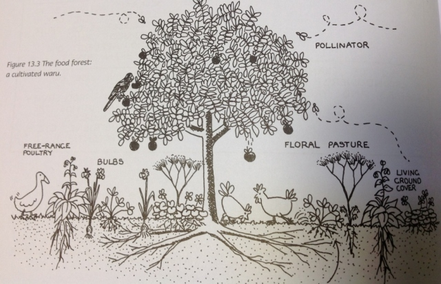 "Image from ""Earth Users Guide to Permaculture"" Rosemary Morrow."