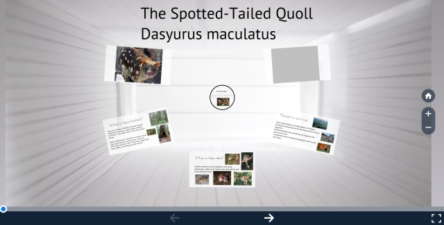 quoll-prezi-image-for-website